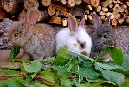 Братцы-кролики