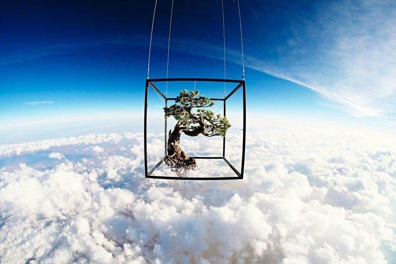 Лучшие фотографии из мира науки в журналах Science и Nature