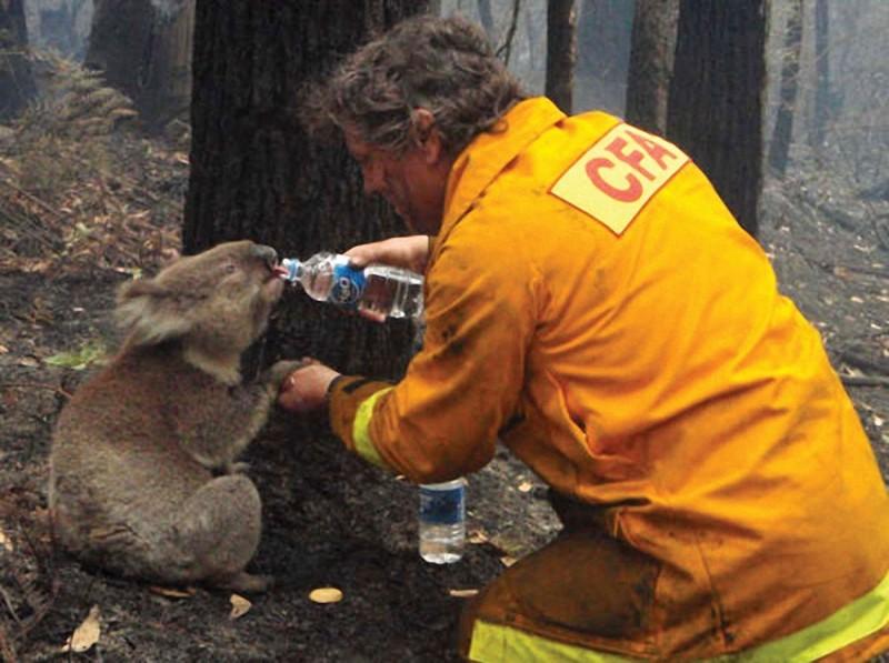 24. Пожарный дает воду коале во время лесных пожаров. Австралия, 2009 год.