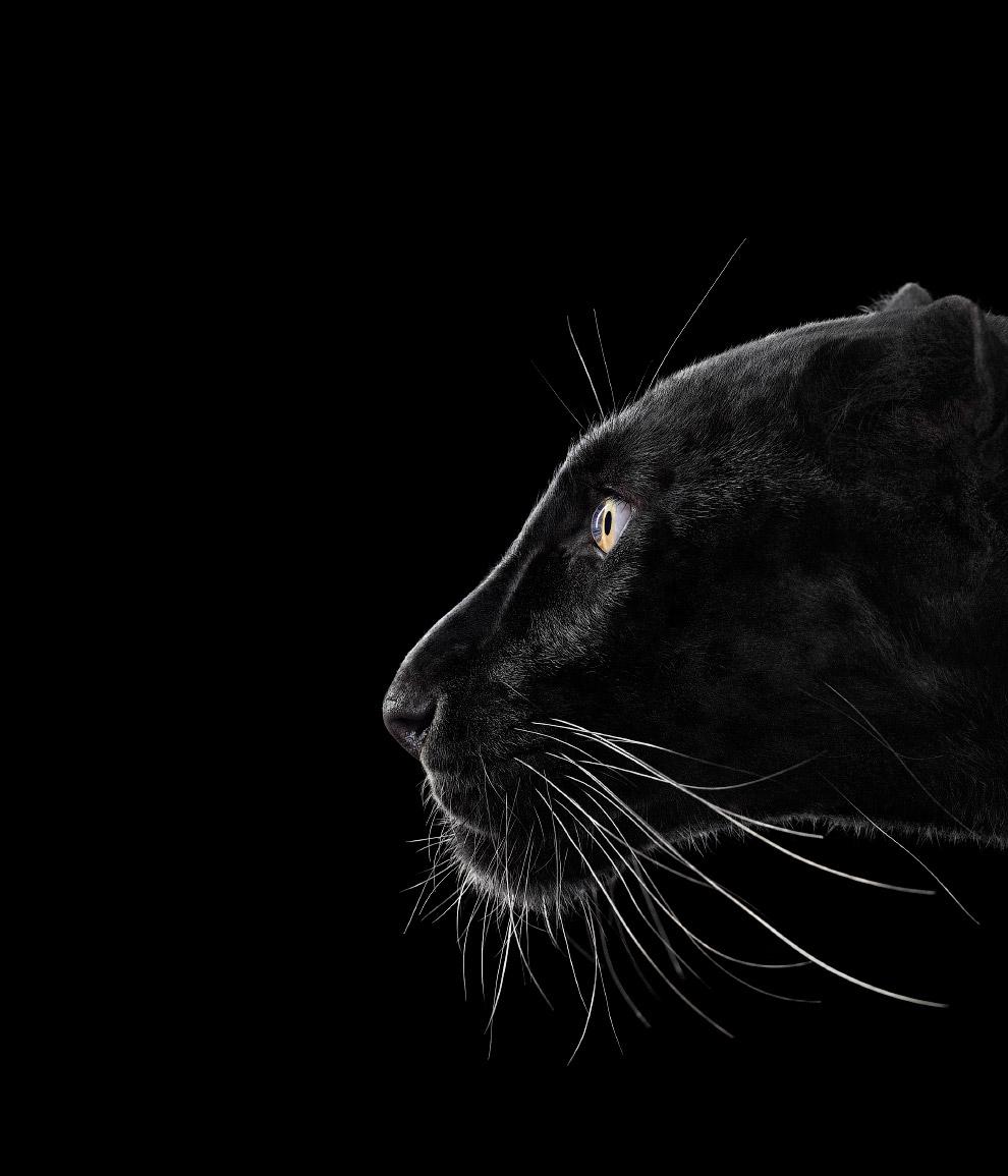 12. Носорог. (Фото Brad Wilson):