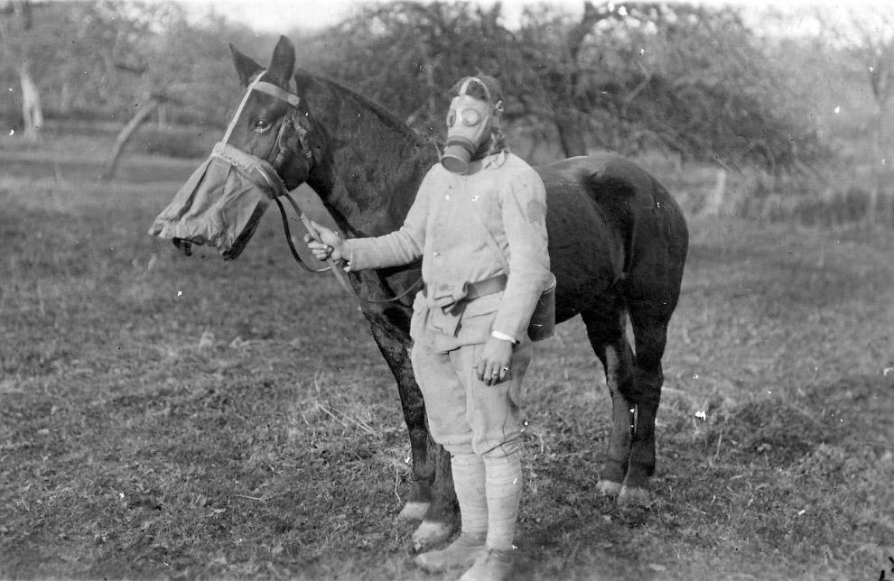 Сотрудники немецкого Красного Креста с собаками идут на фронт. (Фото Library of Congress):
