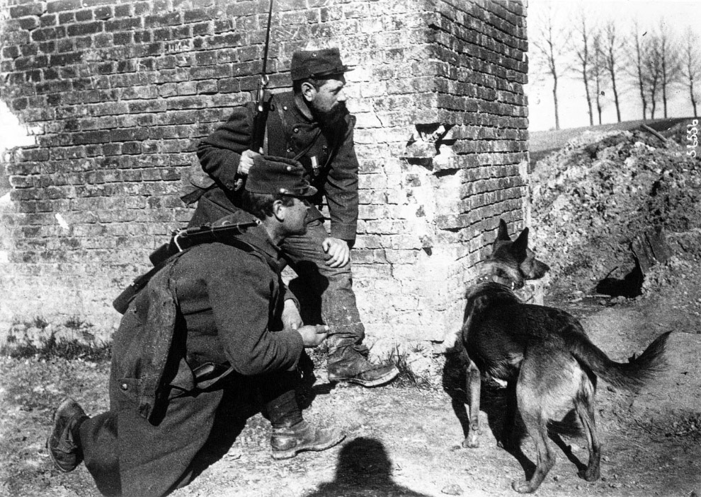 Сербский артиллерия и солдат и биноклем на осле, 1917 год. (Фото Nationaal Archief):