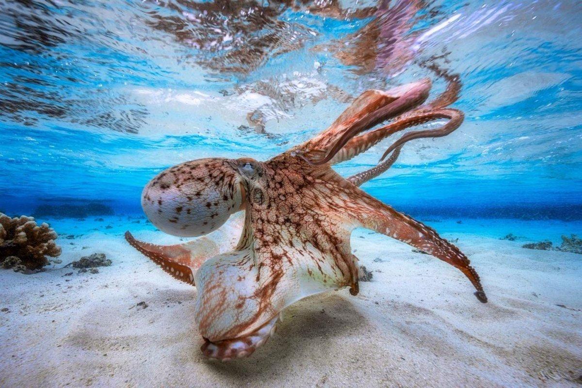 Победители конкурса «Underwater Photographer of the Year 2017»