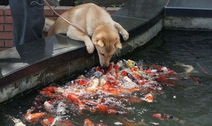 — Привет, рыбки! — Привет, собачка! Привет, собачка! Привет, собачка! Привет, собачка! Привет, собач