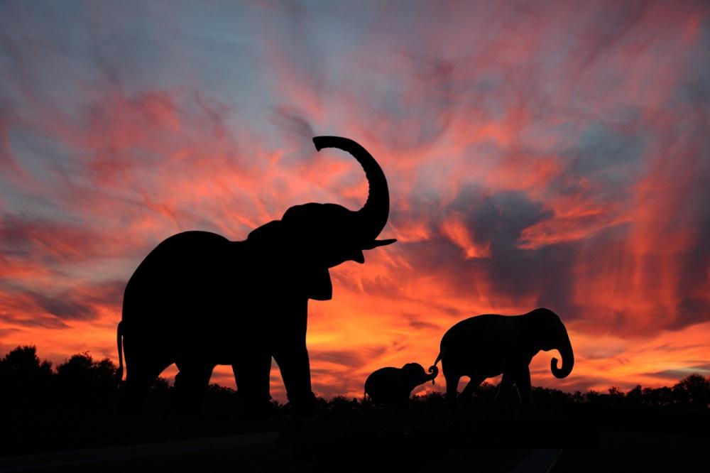 © depositphotos.com   Иобезьянки здесь накаждом шагу. Вовсе немилые