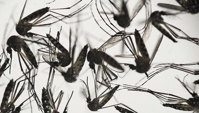 Русские санврачи извели наюге всех комаров-переносчиков вируса Зика