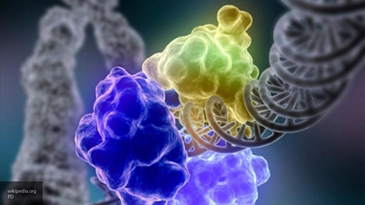 Ученые узнали огеноме небезопасной бактерии отскелета человека