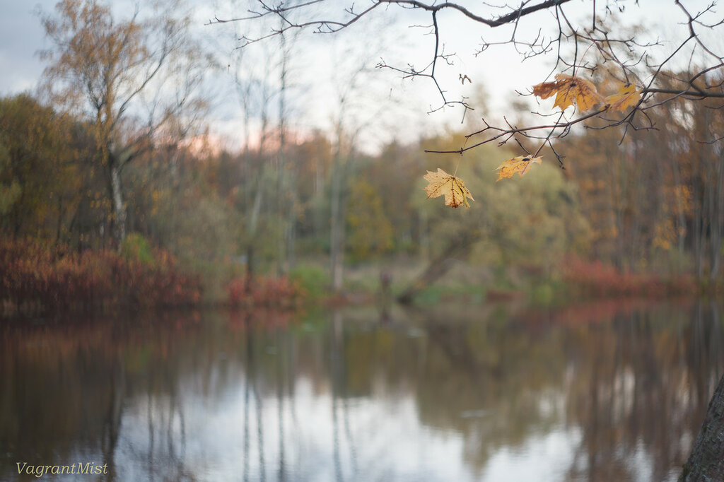 autumn above the water