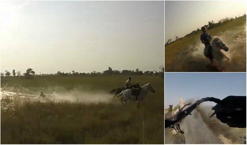 Не ходите в Африку гулять: турист упал с лошади перед преследующей их львицей