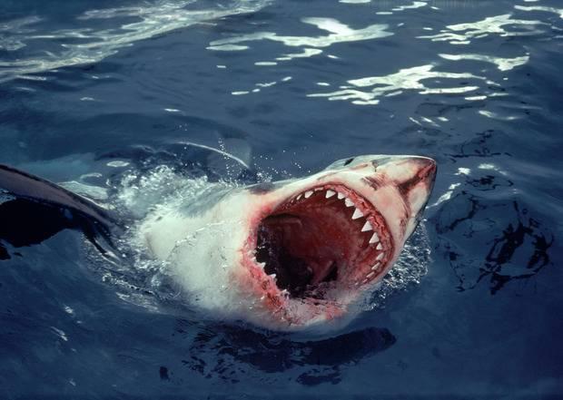 Австралийский рыбалка в открытом море отбился от акулы... шваброй (видео)