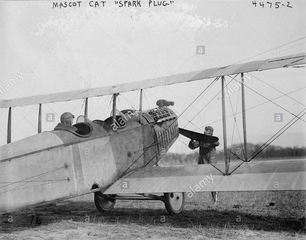 Mascot cat Spark Plug [on plane]