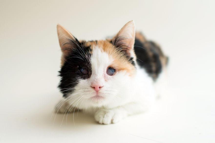 слепые коты