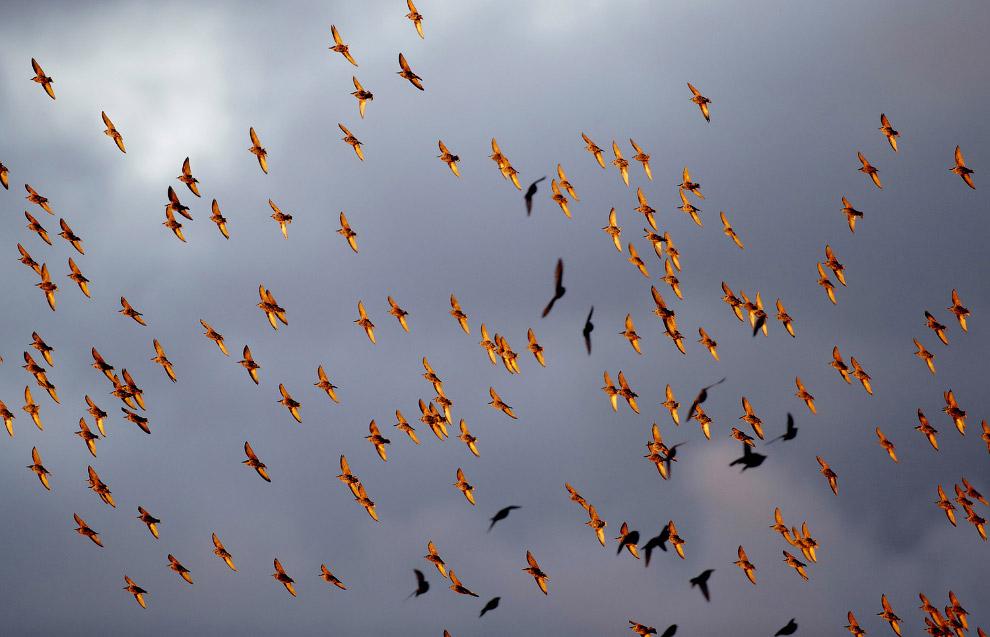 7. Осень — время сбора клюквы на болотах, штат Массачусетс, 14 октября 2016. (Фото Brian Snyder
