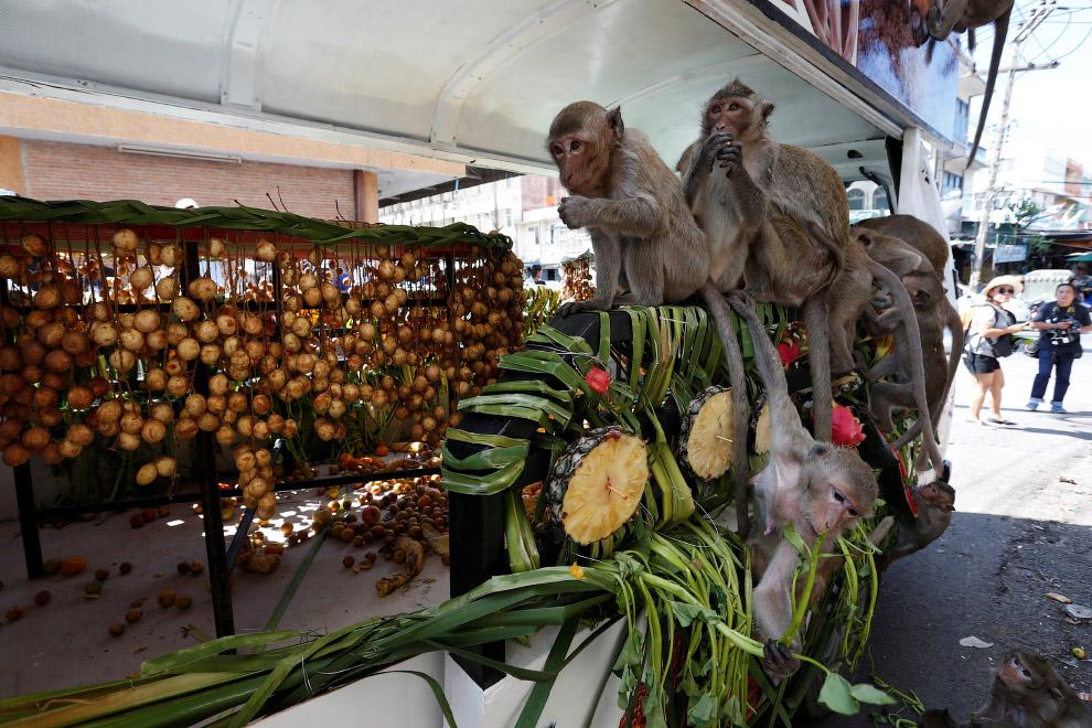 8. Вот и в этом году, 27 ноября около руин храма Пра Пранг Сэм Йод появляются навалы из самых р