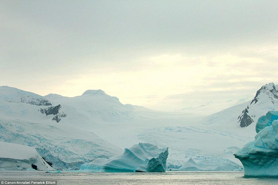 Антарктида никогда не была заселена людьми, но теперь туристам разрешено посещать Антарктиду небольш