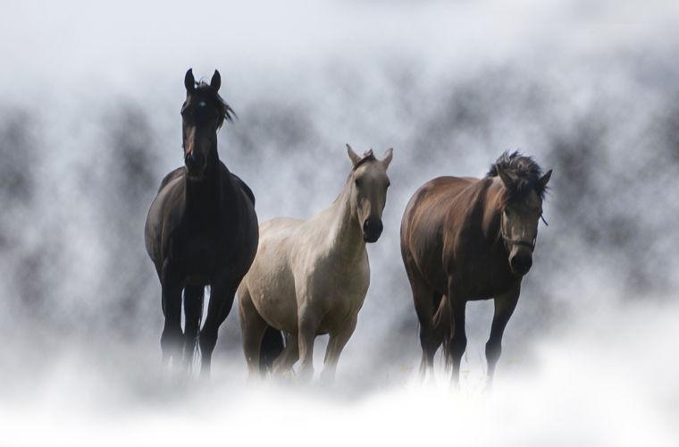 Сердце любого ирландца традиционно преисполнено любовью к лошадям. Действительно, резвящийся на