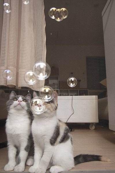 Котята – брат и сестра