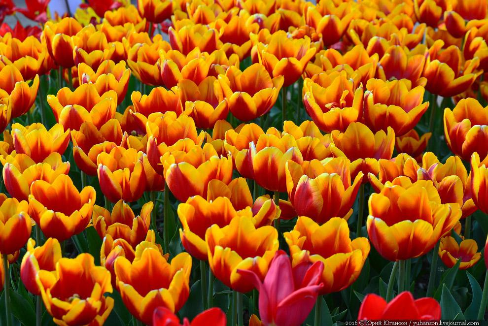 5. Огромный урон саду нанесла оккупация немецкими войсками в годы Великой Отечественной войны.