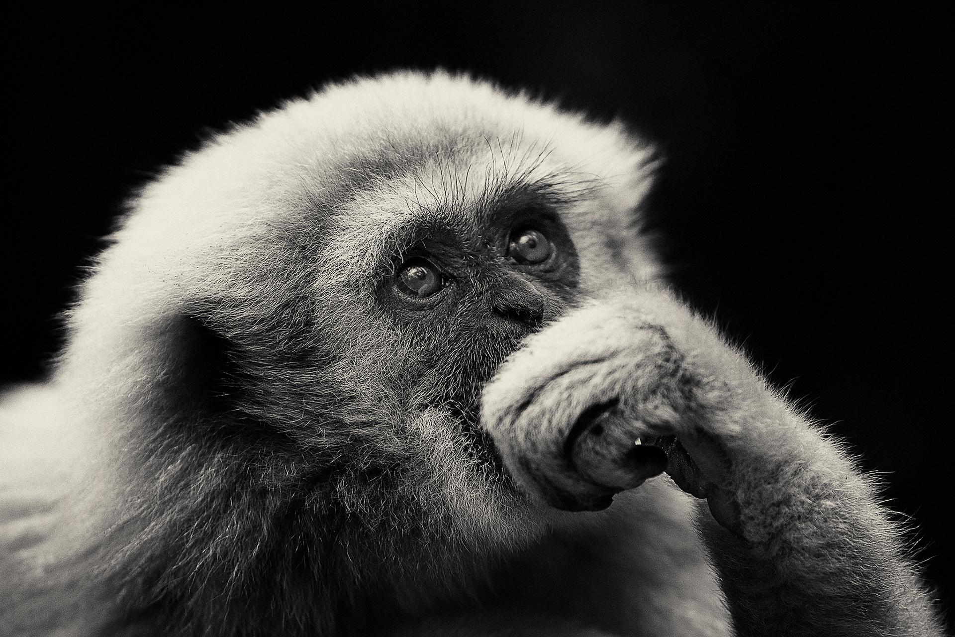 Животные / CREATURES Antti Viitala