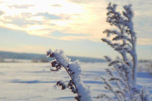 В снежном поле