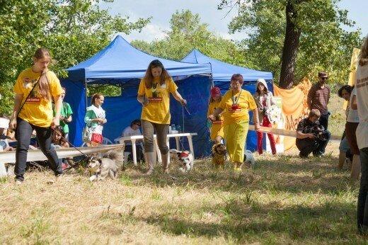 Как в Киеве выбирают лучшую дворняжку на Кубке Барбоса