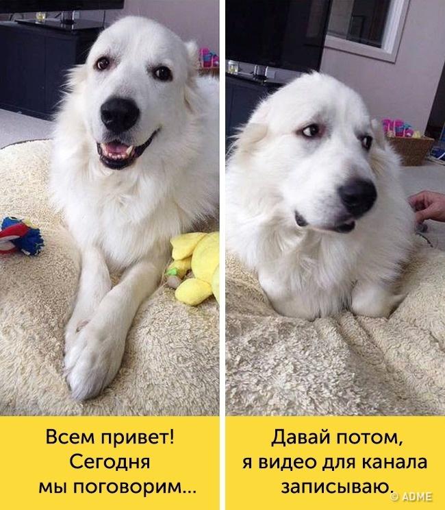 15доказательств, что вкаждой собаке живет великий актер
