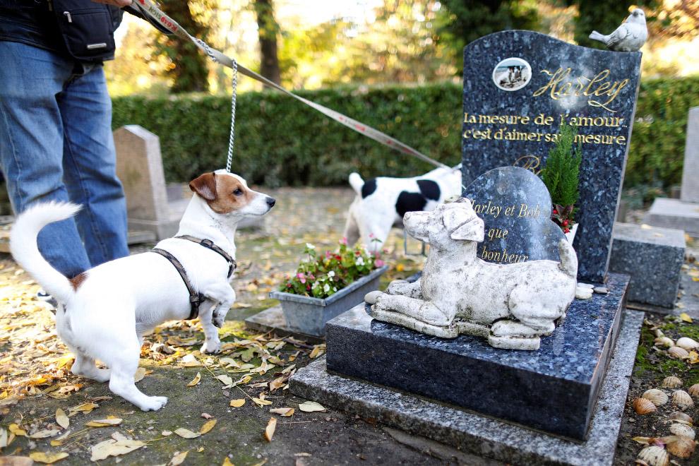 8. Кроме именитых животных, на кладбище находятся и могилы анонимных или обычных домашних питом