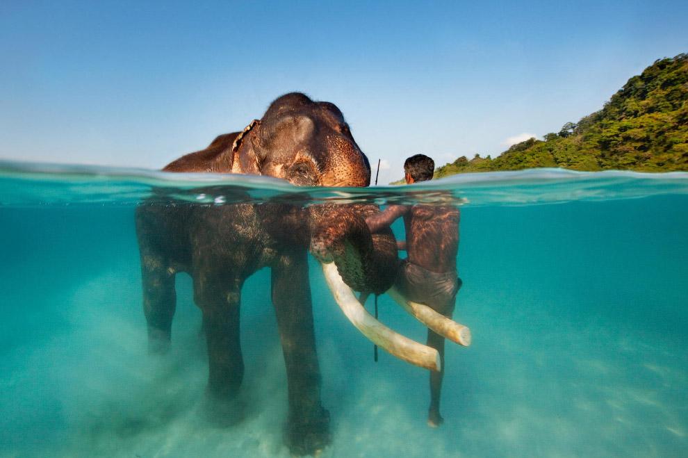 16. Черепахи Бора-Бора, во Французской Полинезии в Тихом океане, расположенный в 241 км к север
