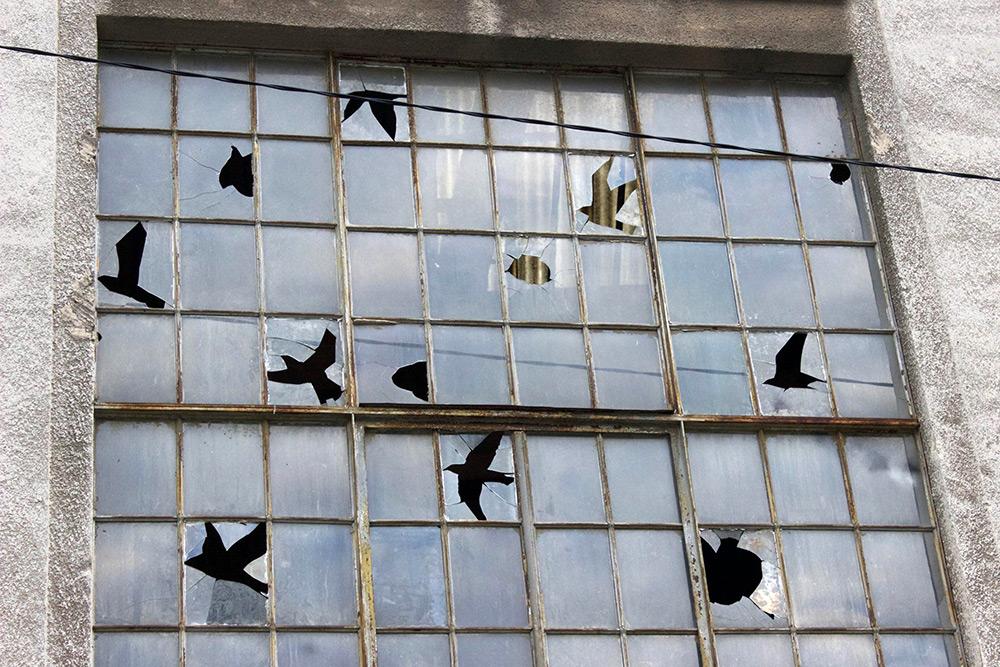 Выбитые окна в форме стаи птиц