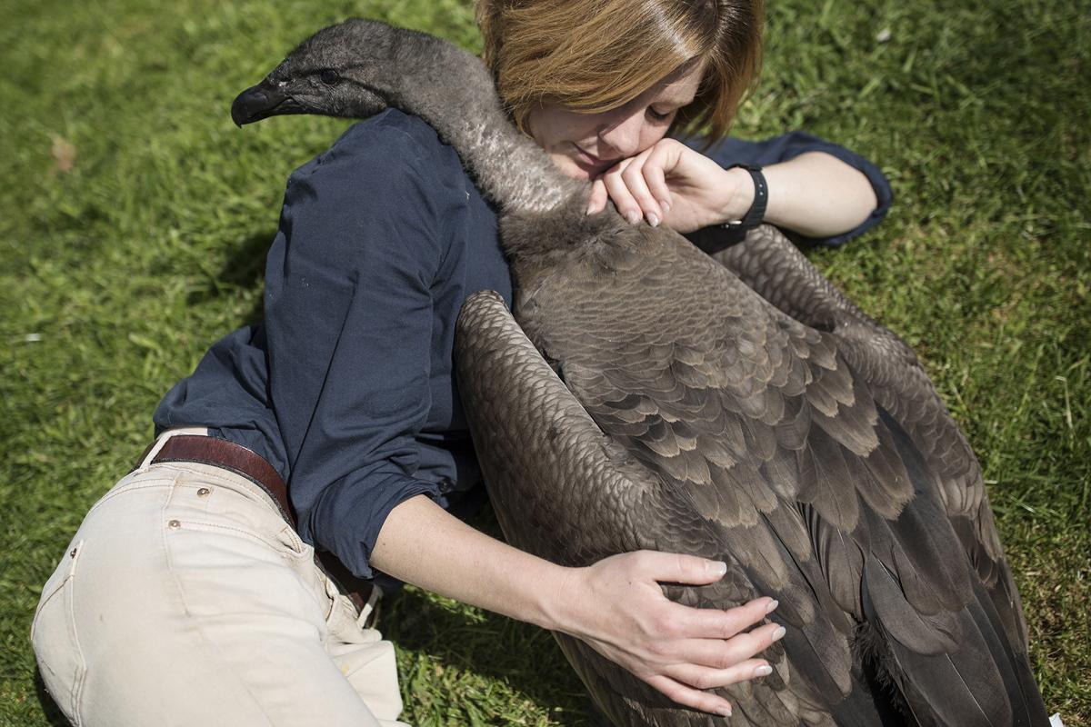 13. Холли Кейл — сотрудница Международного центра хищных птиц (ICBP) — и Моккас — годовалый андский