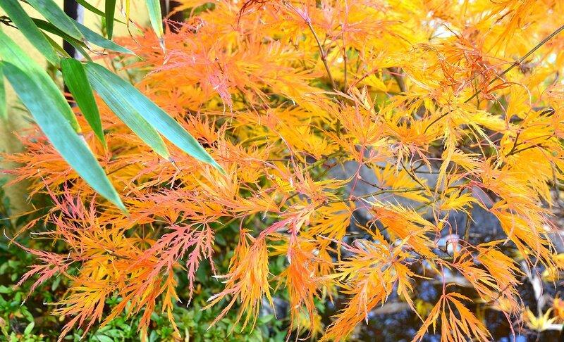 Осеннее разноцветье.