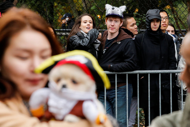People look at the annual halloween dog parade at Manhattan's Tompkins Square Park in New York,