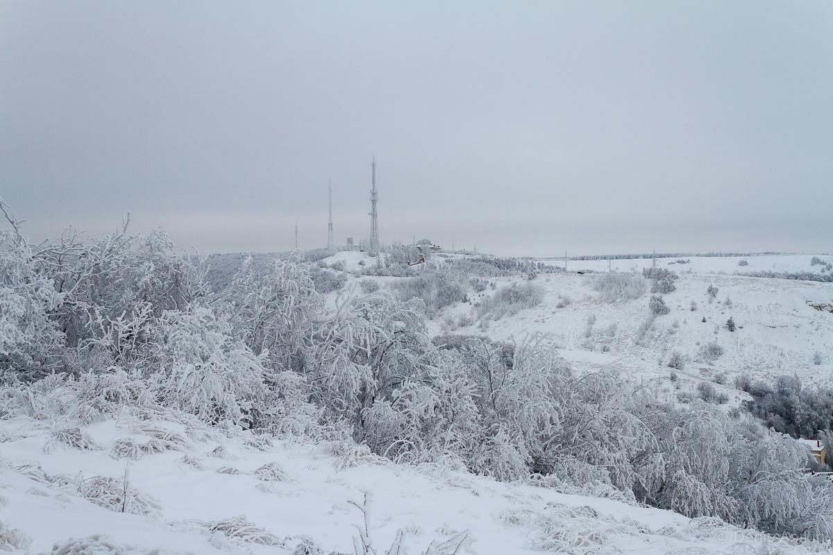 Кумыска раздельная вершина фото 3