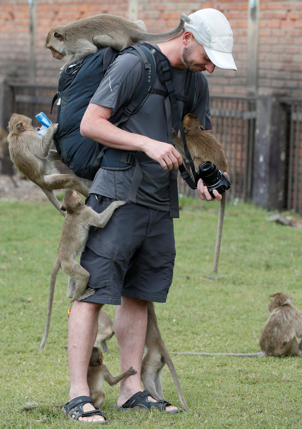 Monkeys climb on a tourist during the annual Monkey Buffet Festival at the Phra Prang Sam Yot temple in Lopburi province
