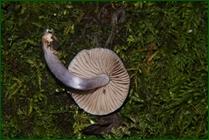 http://img-fotki.yandex.ru/get/196237/15842935.413/0_f15fe_115728d4_orig.jpg