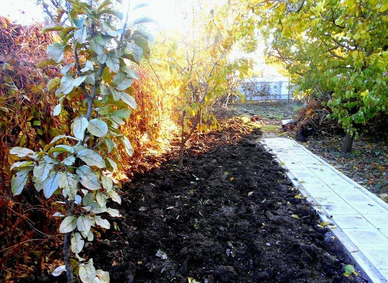 Осень, начало ноября, у свежевскопанной земли ... DSCN9962.JPG