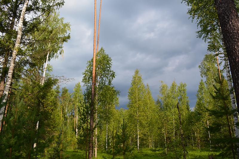 леса 13.jpg