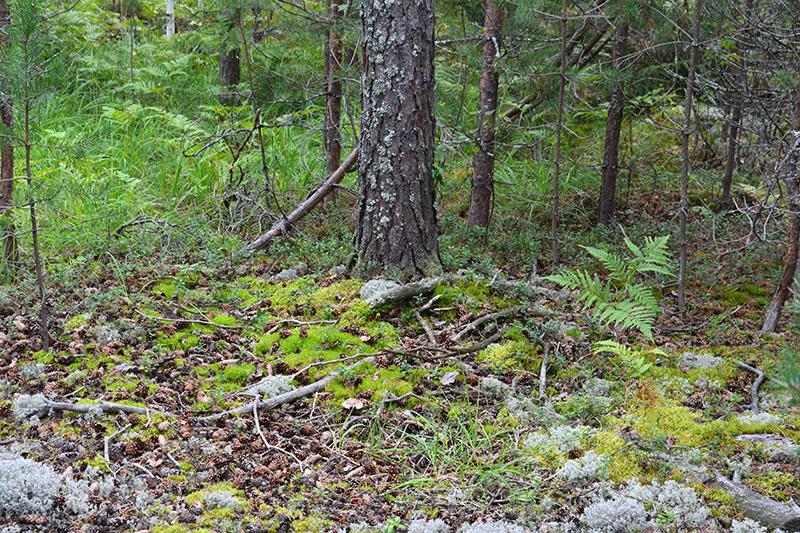 леса 23.jpg
