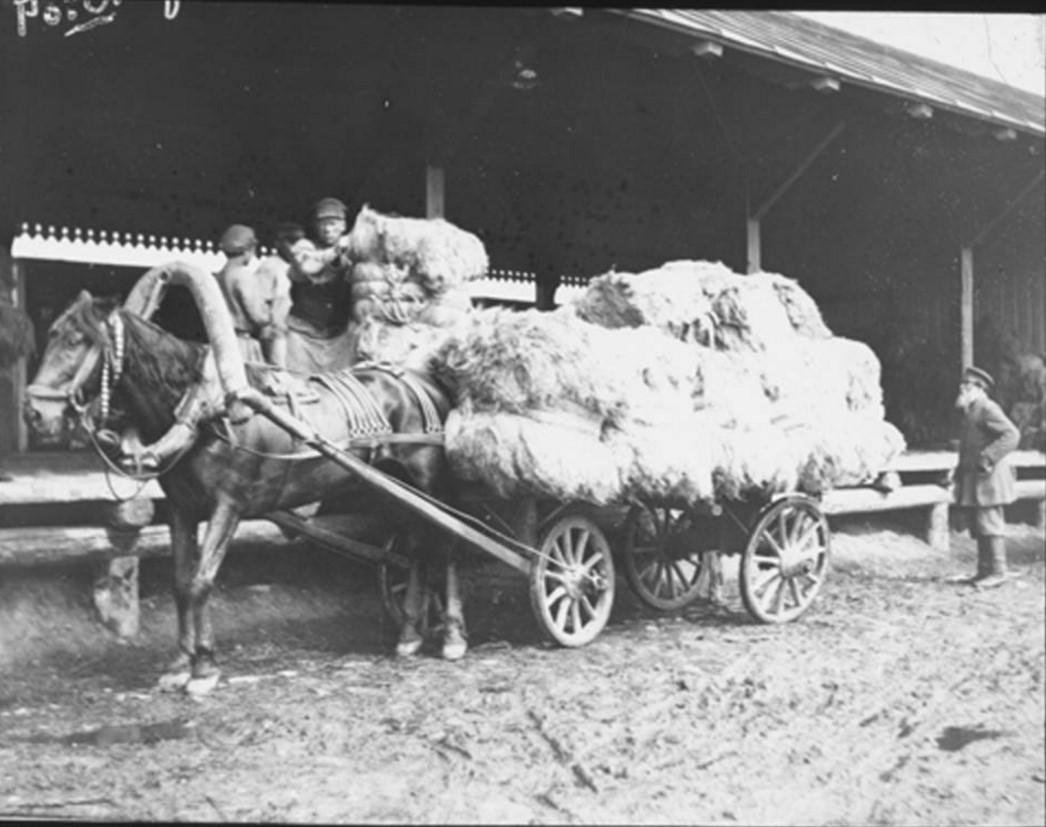 16. Сельскохозяйственные рабочие грузят лен на телегу