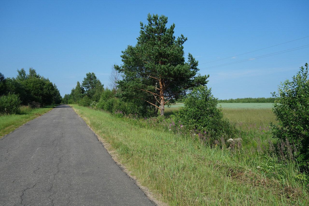 дорога, поле и сосна