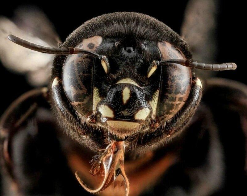 Членистоногие крупным планом   удивительные фотографии насекомых