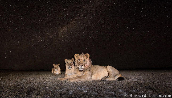 Фотографы дикой природы (14 фото)
