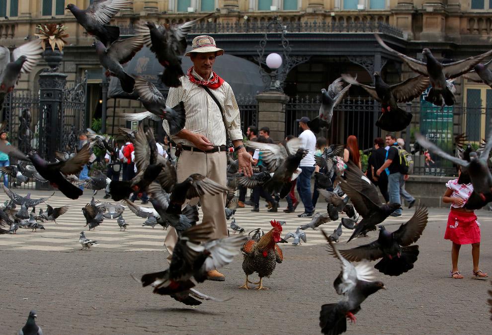 17. Красавец. (Фото Juan Carlos Ulate | Reuters):