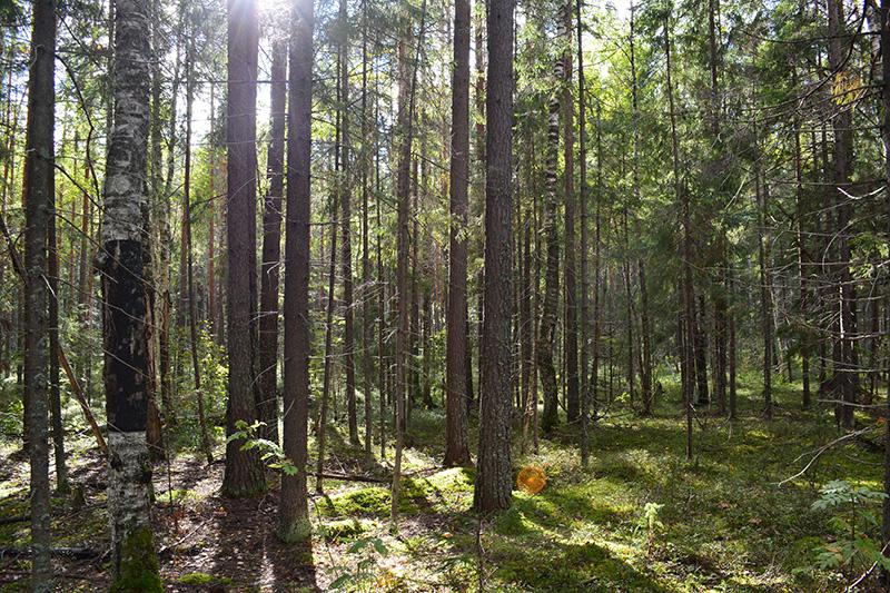 мой лес 16 6.jpg
