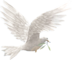 116463058_large_Dove__42_.png