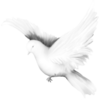 116463016_large_Dove__3_.png