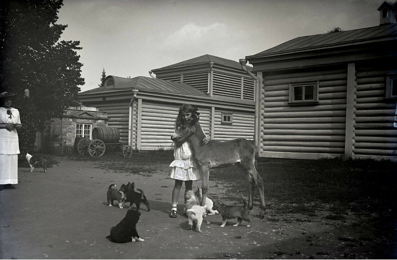1910. Усадьба Солнцево на  берегу реки Клязьмы. Кира Вострякова с животными