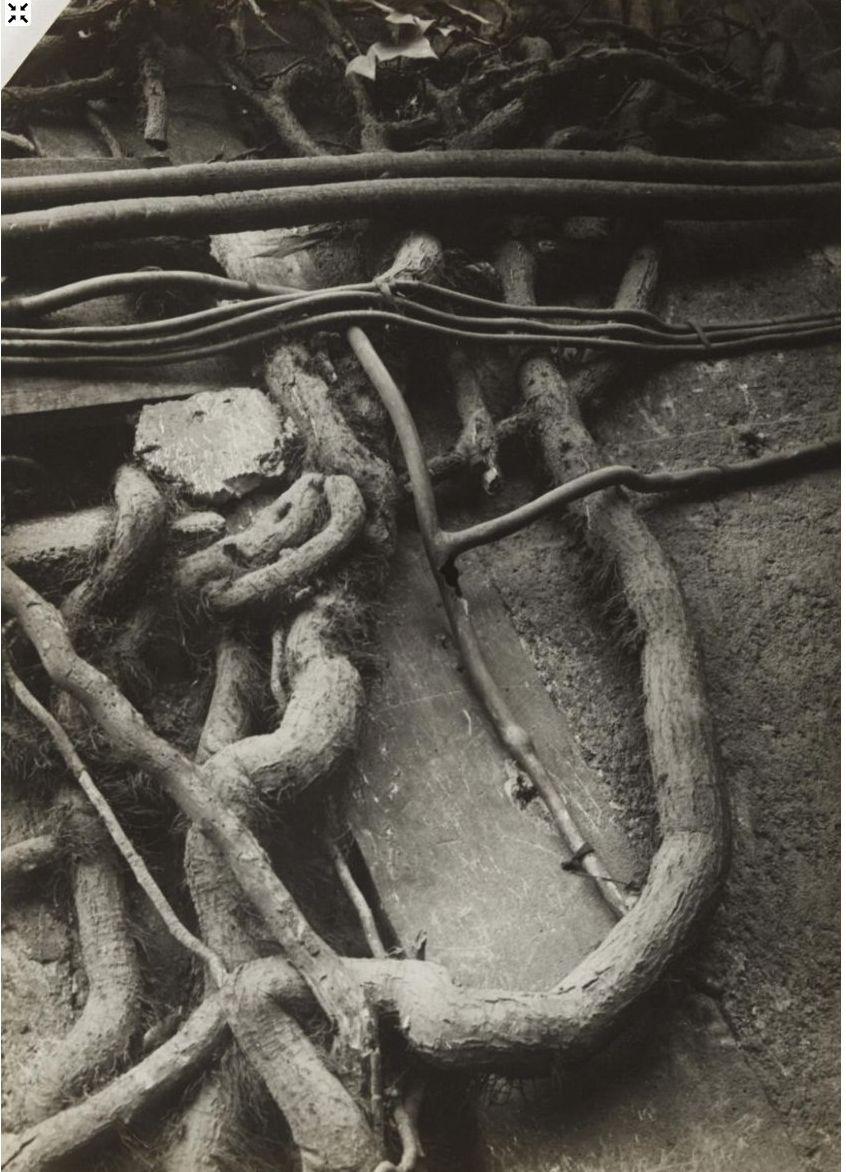 1930. Корни и ветки