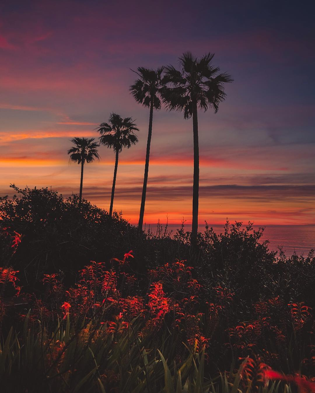 Сказочные пейзажи Сан-Диего от Alec Basanec