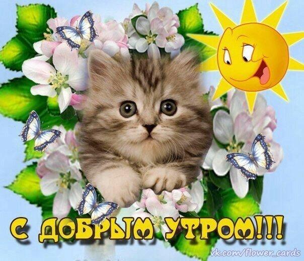 Доброе утро картинки красивые с котятами